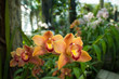 Bright orange orchids in a tropical forest.