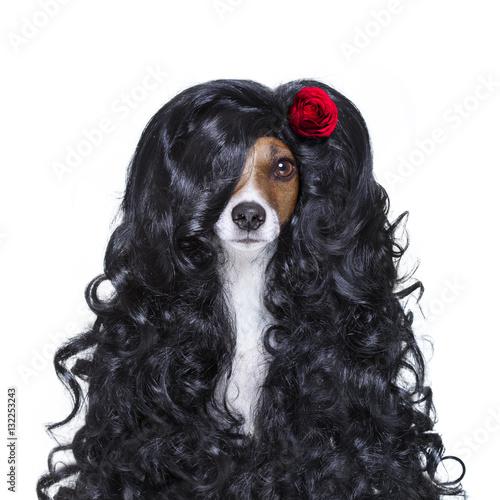 Poster valentines in love spanish lola dog