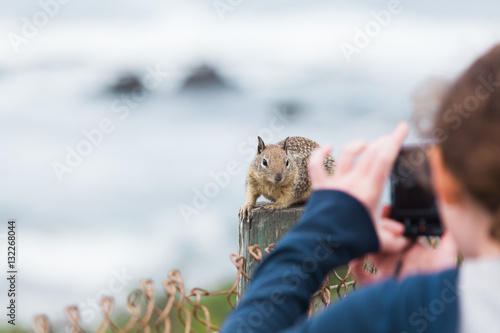 Poster Tourist taking a photo of curious squirrel - Stock image