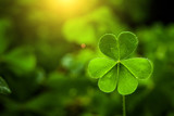 Fototapety clover leaf in lens flare for Valentine background