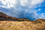 Strong wind on autumn prairie