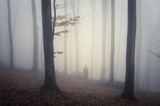 Woods scenery. Fantasy landscape with trees, fog, rainy weather and man wandering in wilderness