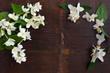 Dark wooden background with fresh jasmine flowers. Top view