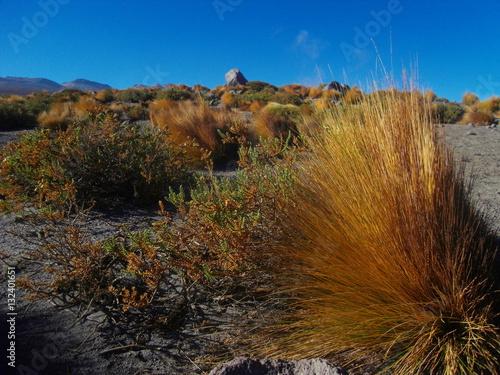 Poster Desert Atacama