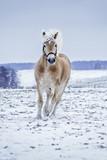 Pferd trabt im Schnee - 132405203