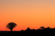 Silhouette of quiver trees (Aloe dichotoma) at sunset, Namibia, southern Africa.