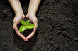 Quadro Hands holding and caring a green young plant