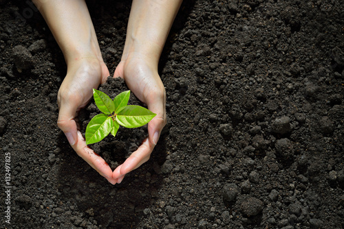 Hands holding and caring a green young plant - 132497825