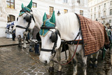 horses for carriage