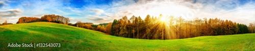 Grüne Wiese mit Sonne und Wald im Hintergrund