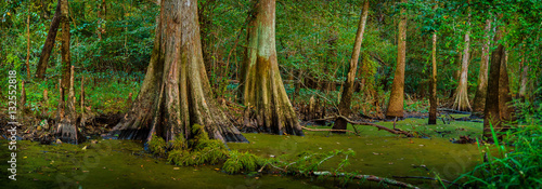 Louisiana Cypress Swamp - 132552818