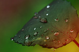 Fresh leaf with dew drops closeup.