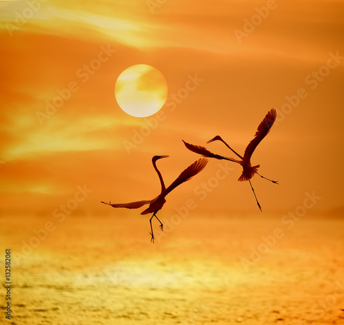 Obraz na Plexi egrets play in sunset