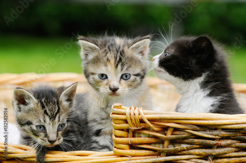 Poster kitten sitting in the basket