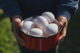 Niño con Huevos ecologicos en la mano