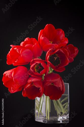 Plakat frech beautiful red tulips