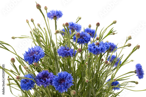 Fototapeta na wymiar Blue Cornflower Herb or bachelor button flower bouquet isolated