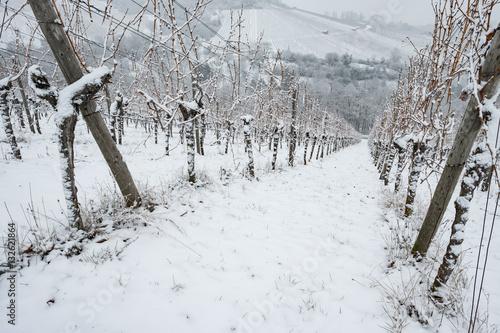Vineyard Weinstock im Weinberg im Winter mit Schnee