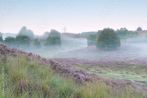 tranquil misty morning in heather hills - 132625821
