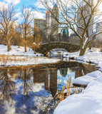 Central Park in winter after the snow storm