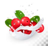 Cranberry in a milk splash on a transparent background. Vector i