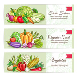 Fresh organic farm vegetables banner set