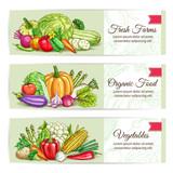Fresh organic farm vegetables banner set