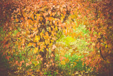 Fall Leaves Filtered