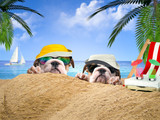 Two happy dogs in the sand on the beach. Ocean, palm trees, tourist vacation