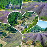 Collage of lavender field in Provence,France