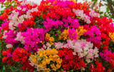 beautiful colorful flower