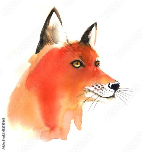 Watercolor fox - 132785663