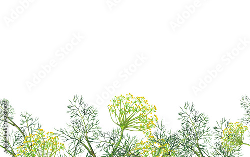 Seamless border of watercolor fennel plant - 132804637