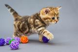 Little kitten  plays with balls