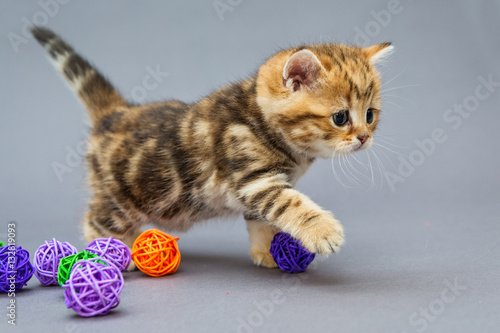 Poster Little kitten  plays with balls