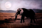 Elephant in the savannah on the background of the moon. Africa.