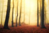 magical foggy forest with sun rays