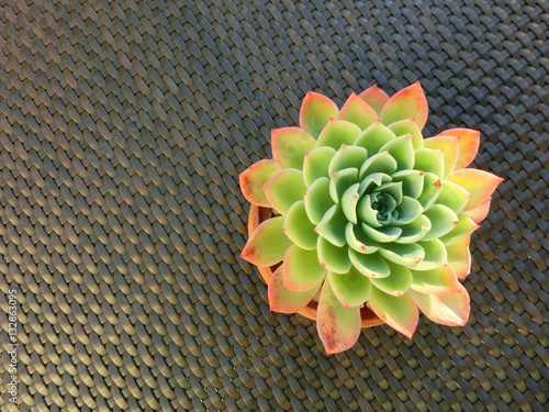 Poster Round succulent plant top view on table