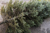 Old Christmas Tree. End of Christmas. Old discarded christmas tree. - 132886081