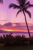 Palm trees silhouetted at Sunset in Maui