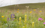 Prairie wildflowers with horizon in the distance - 132901073