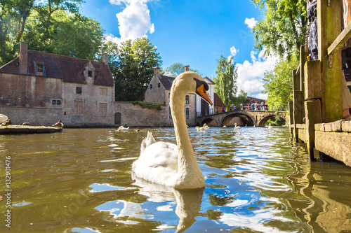 Keuken foto achterwand Brugge Swan in a canal in Bruges