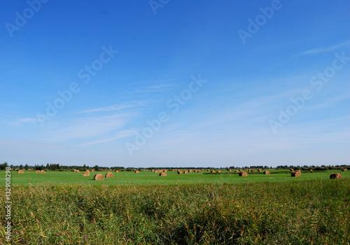 Siberian hay field