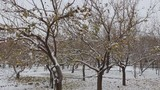 snow on winter trees