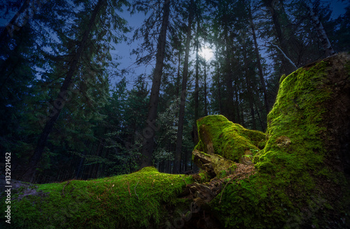 Fotobehang Betoverde Bos Fairytale night forest by the moonlight. Fallen tree trunk, covered by green moss, on foreground.
