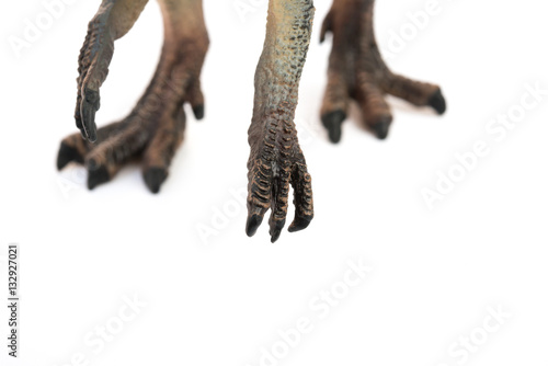 Poster feet and clasws of spinosaurus toy on white background