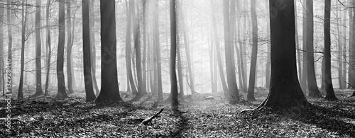 Łysy las bukowy zimą, promienie słoneczne przenikają przez mgłę, panoramę, czarno-białe