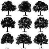 Tree collection - ve...