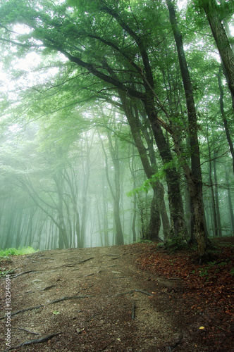green forest in morning mist