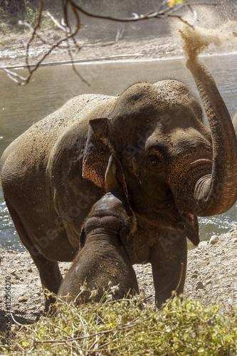 Poster Elefant bläst Staub